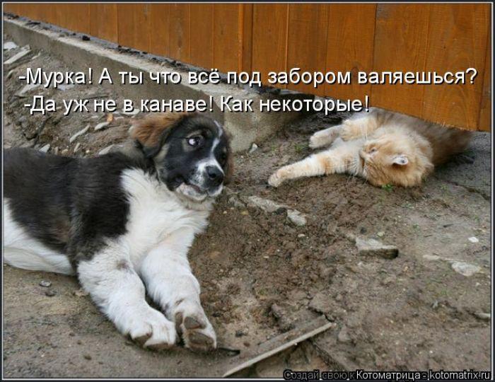 Для поздравления, смешные фото собак с надписью