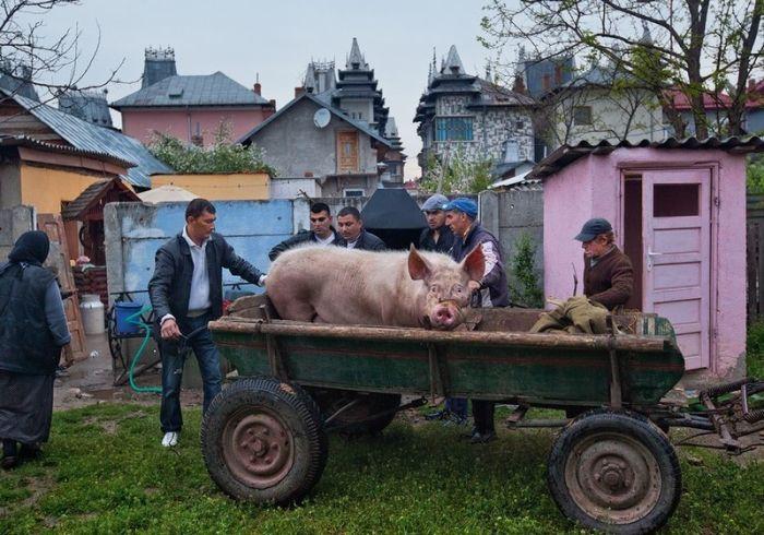 Бузеску - поселок неприлично богатых цыган (37 фото)