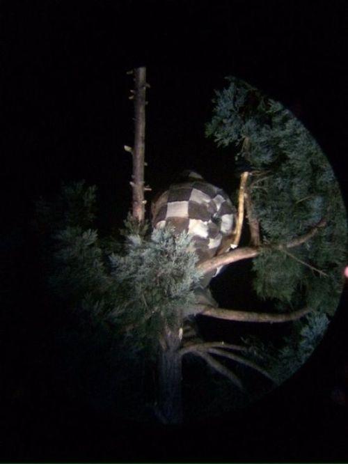 Странный американец залез на дерево (4 фото)