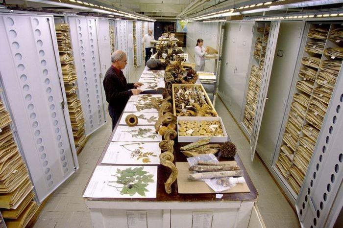 Хранилище Национального музея естественной истории в Вашингтоне (12 фото)