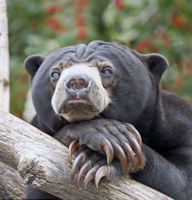 Солнечные медведи и дни недели (11 фото)