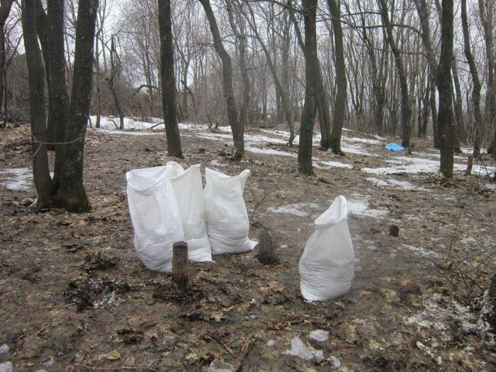 В лесопарковой зоне Саратова деревья обсыпали солью (5 фото)