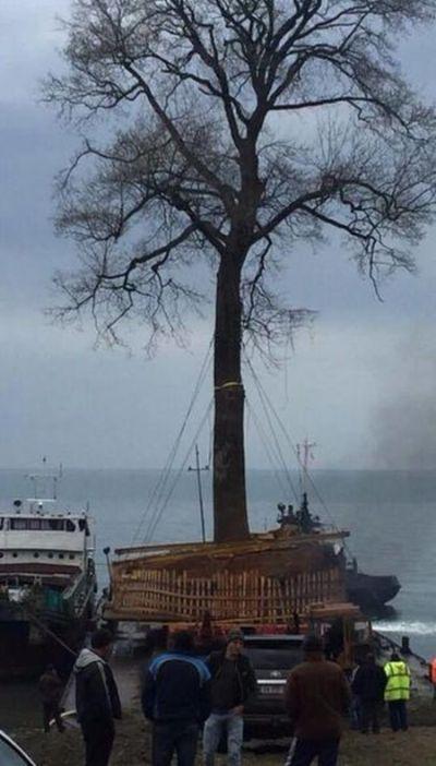 Транспортировка векового дерева в Грузии (3 фото)