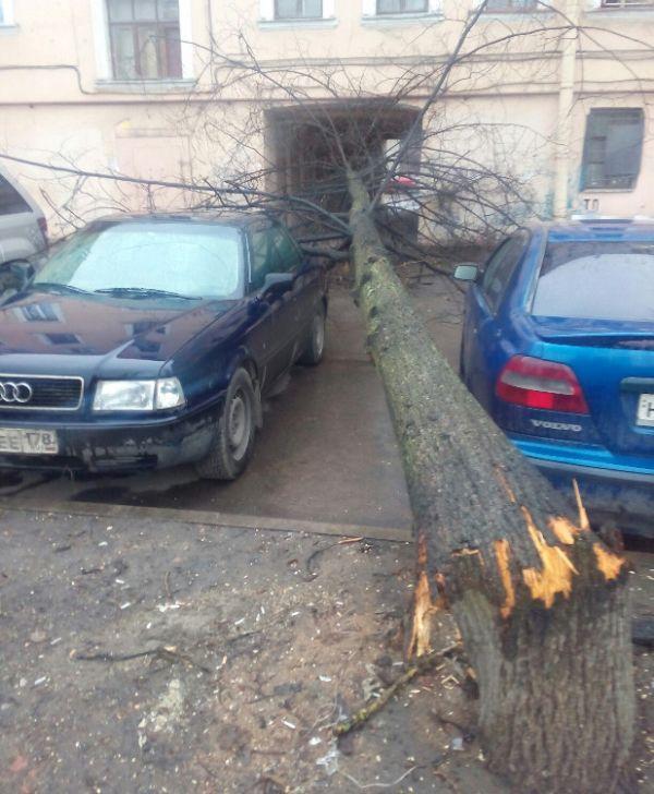 Везучие автомобилисты (2 фото)