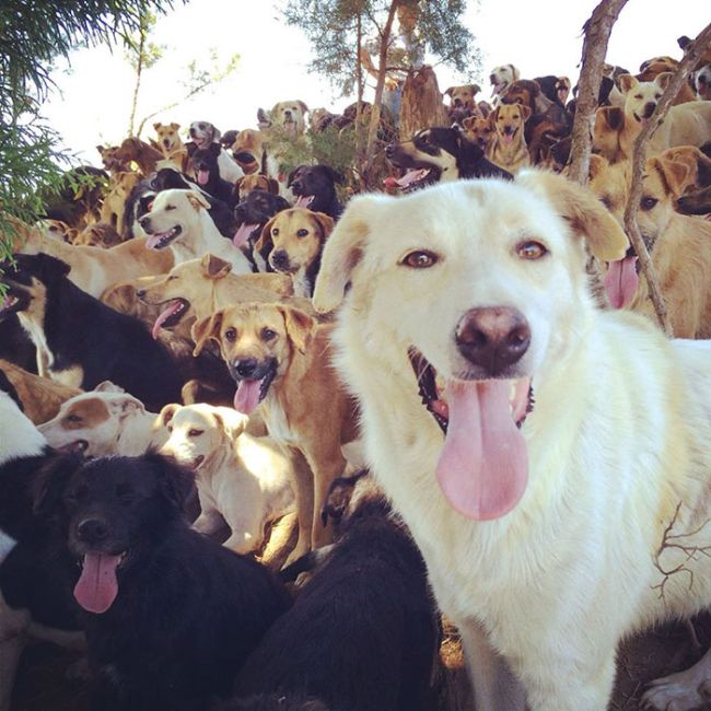 Собачий рай в Коста-Рике (10 фото)