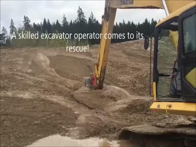 Экскаваторщик спас олененка