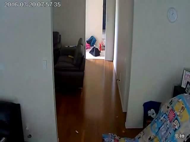Преступник обокрал дом, прячась под одеялом
