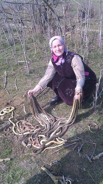 В Дагестане пенсионерка убила 80 змей, поселившихся на ее огороде (2 фото)