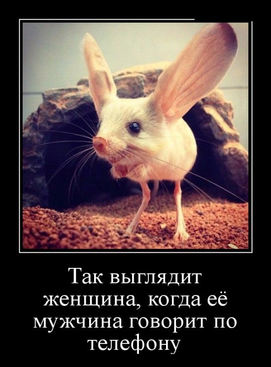 http://trinixy.ru/pics5/20160407/demotavtory_19.jpg