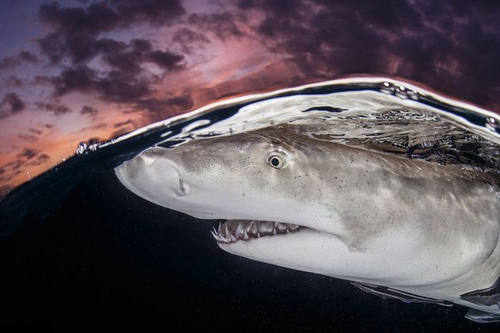 Лучшие работы конкурса подводных фото (20 фото)