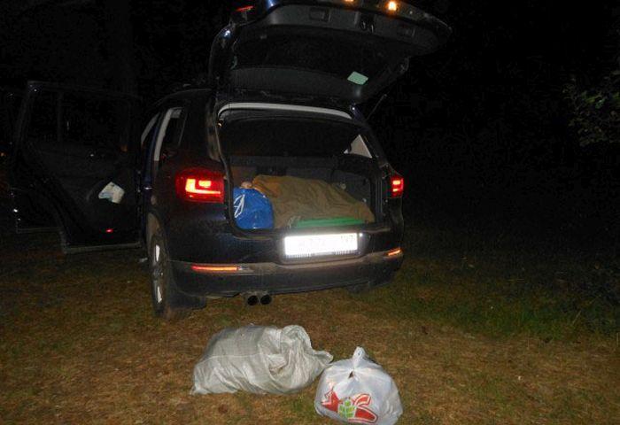 Как дачница лес от мусора спасала (10 фото)