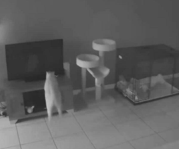 Пушистый проказник опрокинул телевизор