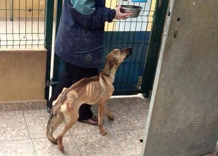 Невероятное преображение несчастной собаки (6 фото + видео)