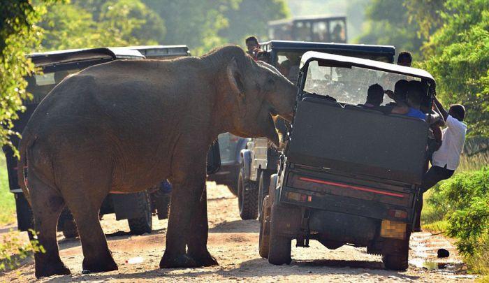 Новые фото туристов по Шри-Ланке, Балапития