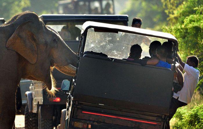 Слон потребовал еду у туристов (8 фото)