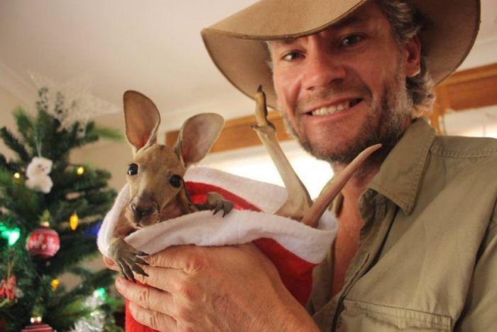 Крис Барнс - спаситель детенышей кенгуру (20 фото)