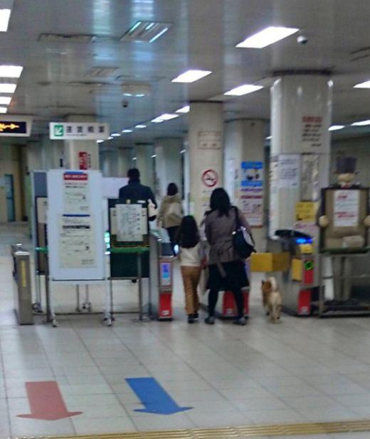 Четвероногий безбилетник попался в метро (4 фото)