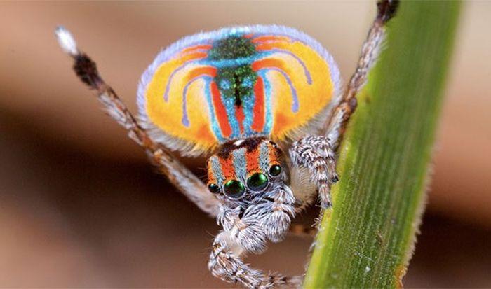 Любопытные факты о пауках (25 фото)