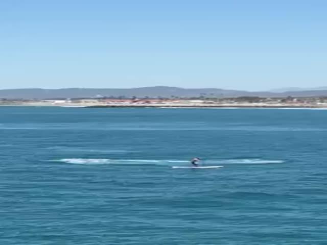 Американец чуть не столкнулся с китом