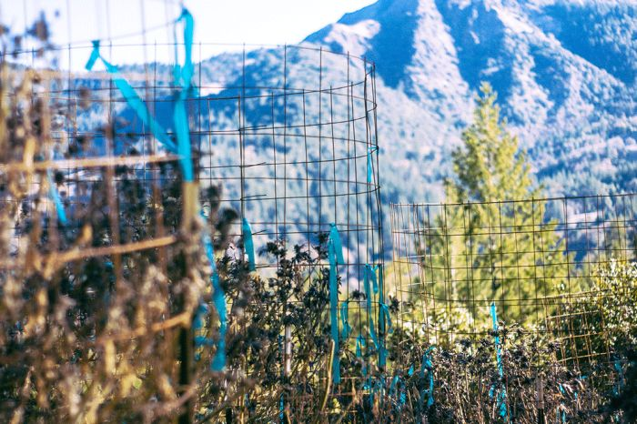 Как устроена работа на ферме марихуаны (21 фото)