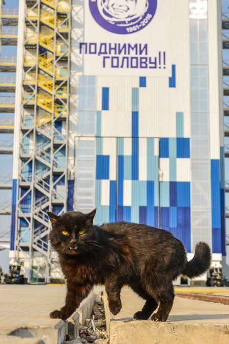Бездомного кота, живущего на космодроме «Восточный», эвакуируют на время запуска ракеты (2 фото)