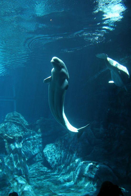Может быть именно поэтому появился миф о существовании русалок? (3 фото)