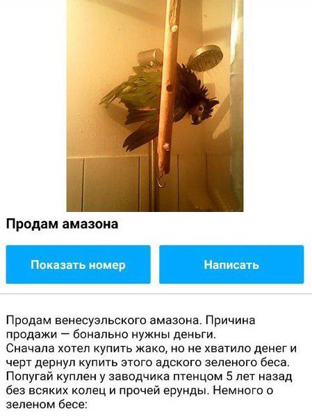 Забавное объявление о продаже попугая (3 фото)