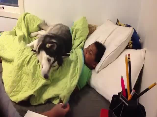 Собака не дает женщине поднять сына с постели