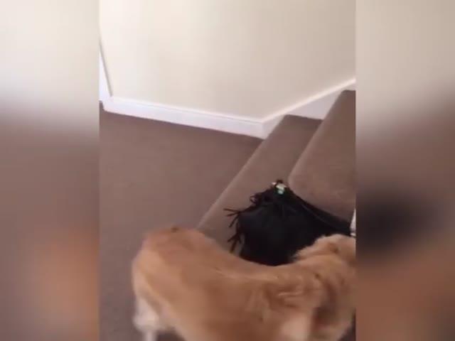 Собака встретилась с хозяйкой после 7-месячной разлуки