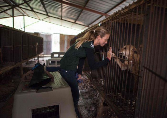 В Южной Корее спасли 200 собак, которых должны были съесть (9 фото)
