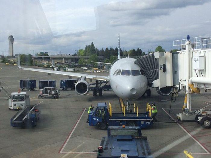 В США самолет совершал экстренную посадку после столкновения со стаей птиц (3 фото)
