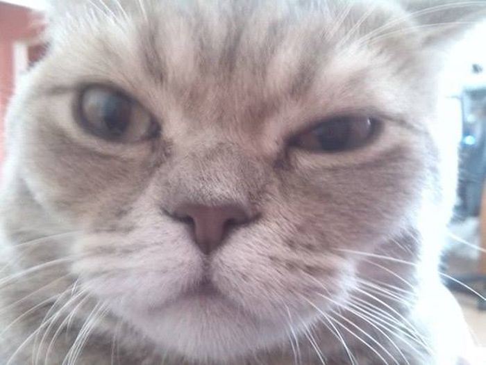 Запуганные котом соседи вызвали ОМОН (2 фото)