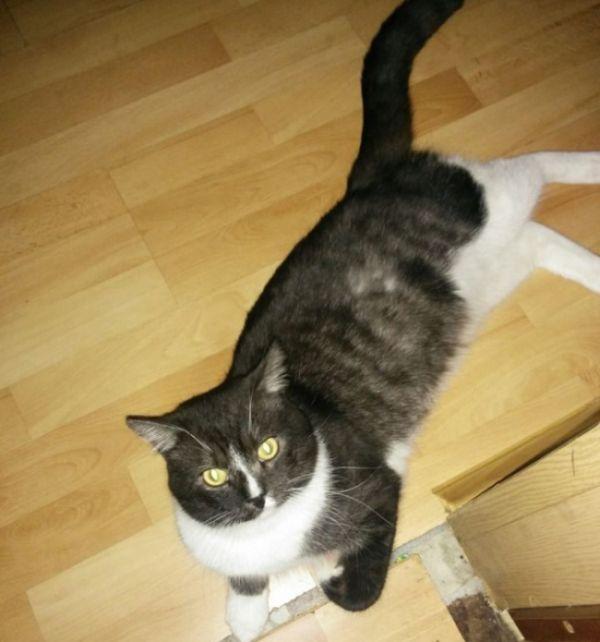 Москвич решил продать невинность своего кота (2 фото)