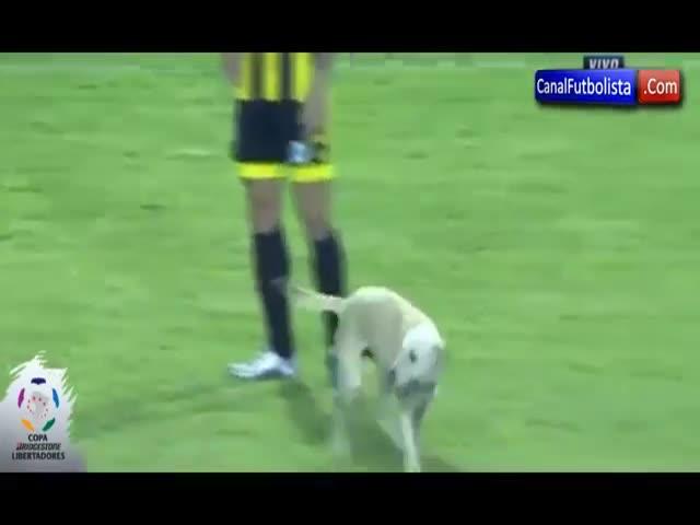 В Венесуэле радостная собака прервала футбольный матч
