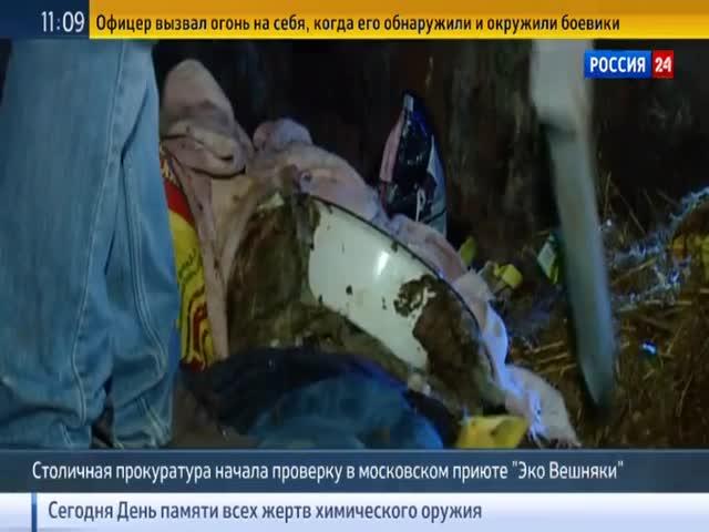 В московском приюте для животных погибло более 40 кошек и собак