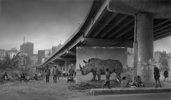 Портреты животных на покинутых ими территориях (21 фото)