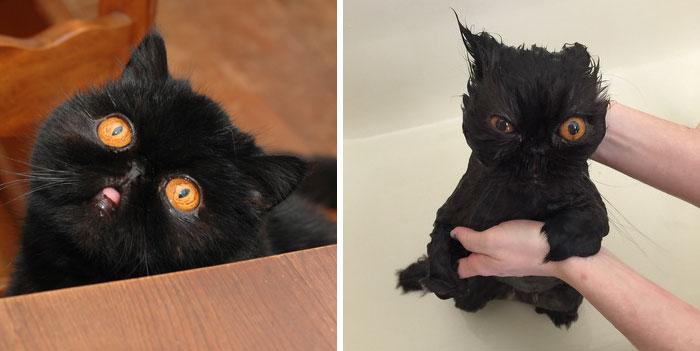 Смешные фотографии кошек до и после купания (21 фото)