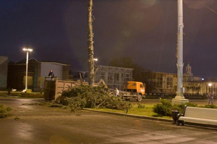 Как уничтожали аллею голубых елей на ВДНХ (6 фото)