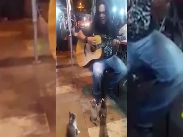 Уличный музыкант поет для котят
