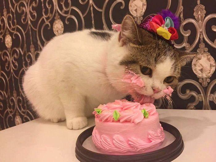 Кот пробует торт (4 фото)
