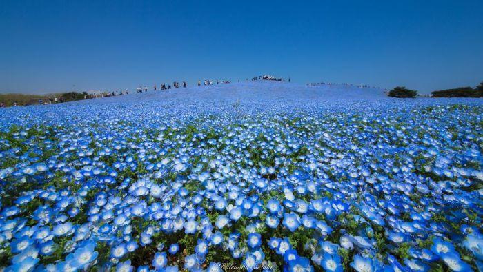 Красоты весенней Японии (8 фото)