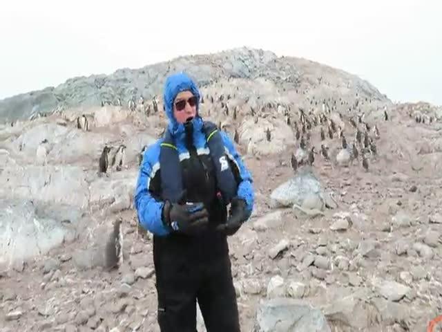 Забавная реакция пингвинов на оперное пение