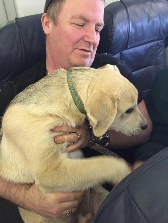 Жителям канадского города Форт-МакМеррей разрешили брать животных в салон самолета (9 фото)