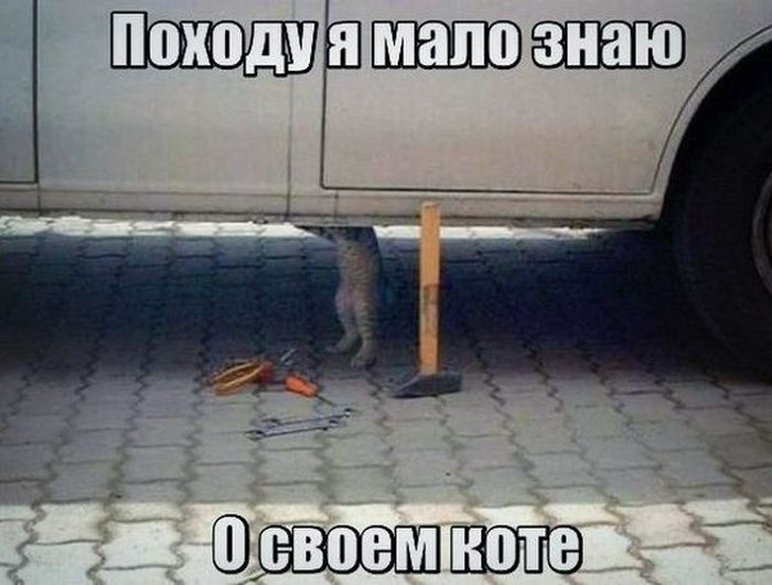 http://trinixy.ru/pics5/20160513/auto_prikoli_38.jpg