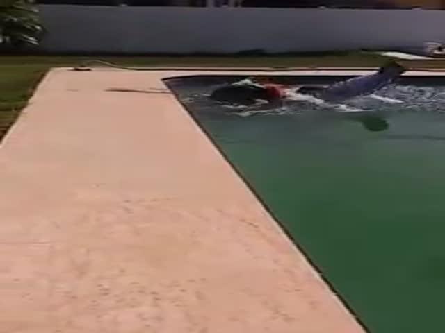 Парень на газонокосилке упал в бассейн