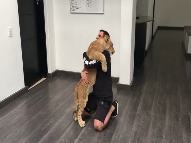 Дружелюбный львенок встретил своего друга