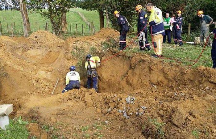 Спасение лошади из грязевого плена (11 фото)