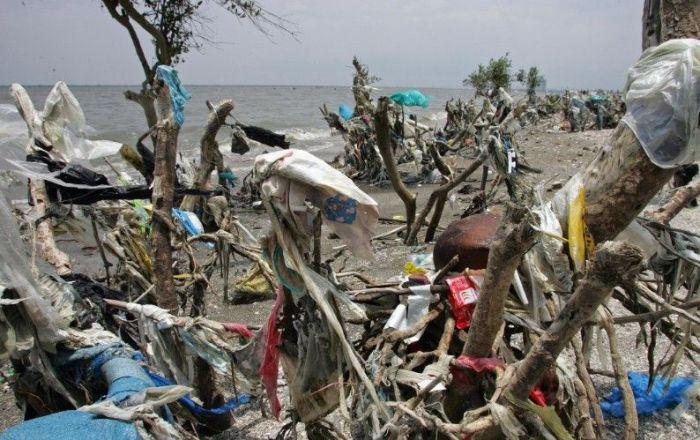 Гибель мангровых лесов на Филиппинах (5 фото)