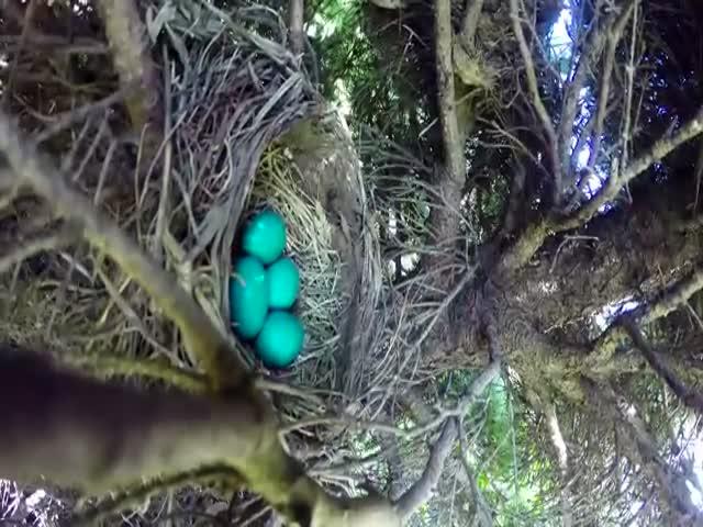 Установленная над гнездом камера сняла птичью трагедию
