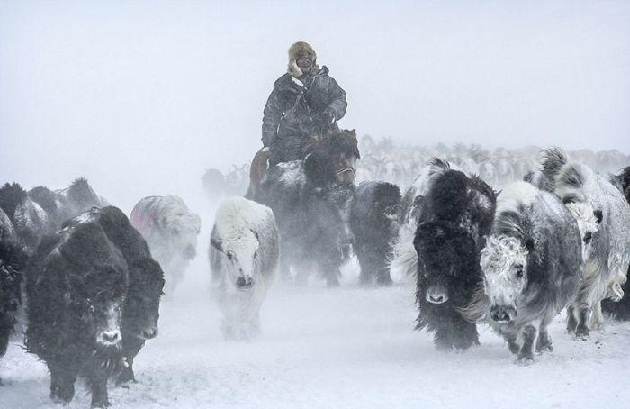 Весеннее переселение кочевой казахской семьи (26 фото)